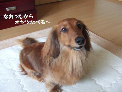 先代犬がお世話になった病院の院長、志村けんを真面目にした感じ。でもハゲてません。