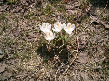 春のはな1
