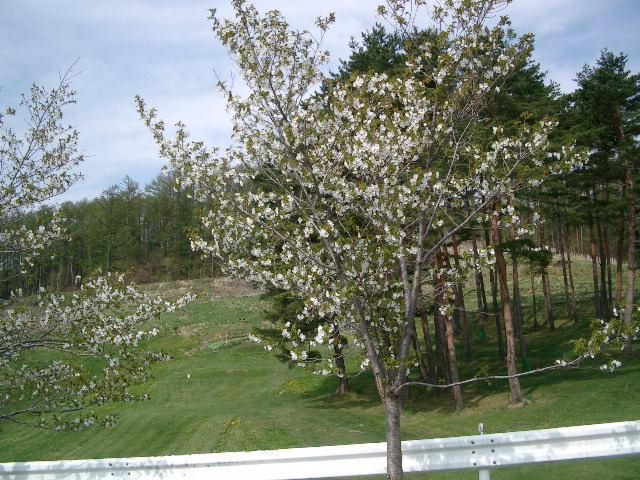 21.5.4-7桜