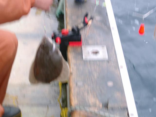 陸奥湾カレイ釣り21.6.14-32