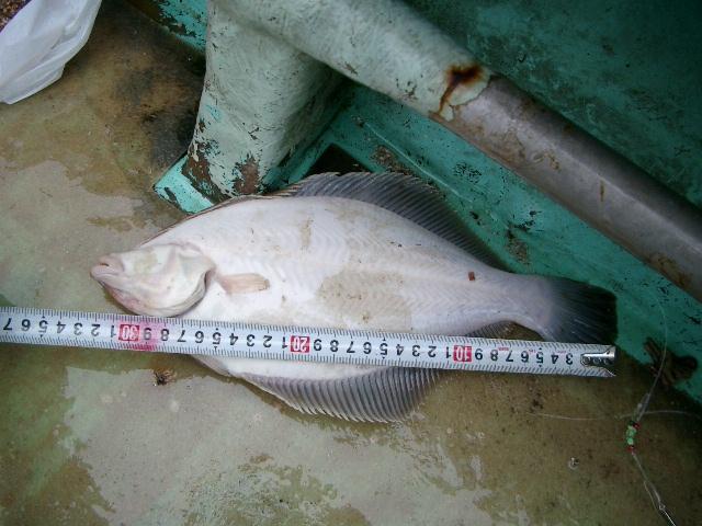 陸奥湾カレイ釣り21.6.14-45
