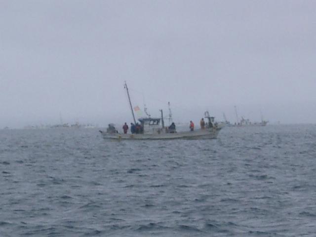 陸奥湾カレイ釣り21.6.14-49