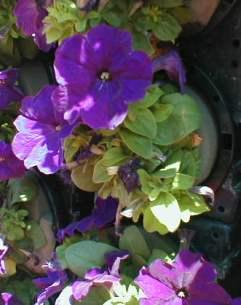 JR駅⑤花の塔の仕組み 2009.5.12