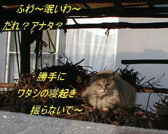 朝日ネコ 2008.5.19