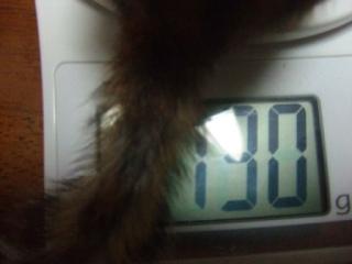 体重測定 060423