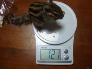 体重測定 060430