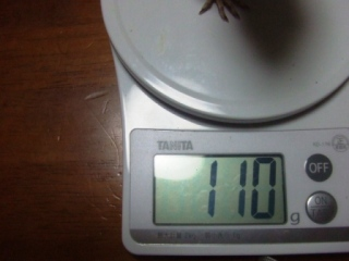 体重測定 060521