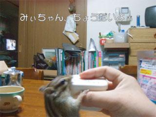 かぼちゃんGET1