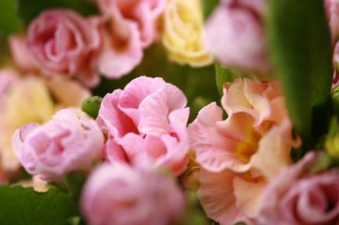 パステルカラーな花♪