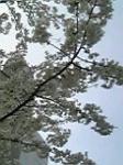 06-04-01_17-14.jpg