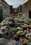 多肉植物の栽培場所