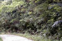 於茂登岳登山道への道