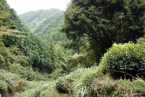 蔦の細道2