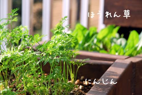 人参とほうれん草20081023