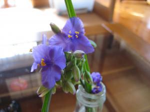 諒下校土産紫の花