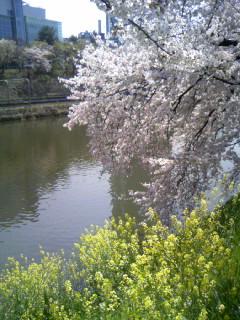 sakura ichigaya