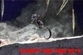 newyearcard_2012.png