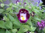 町で見かけた花シリーズ08252