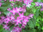 町で見かけた花シリーズ08253
