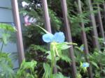 町で見かけた花シリーズ08258