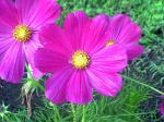 町で見かけた花シリーズ08273
