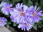 町で見かけた花シリーズ08284