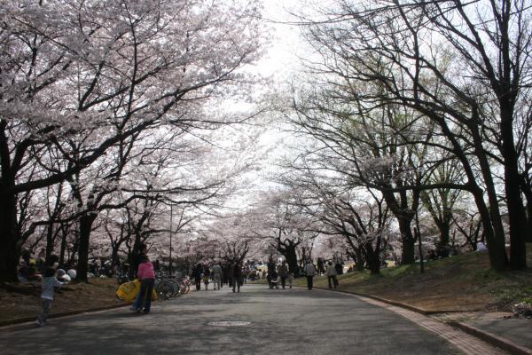 2009-4-5-桜全体