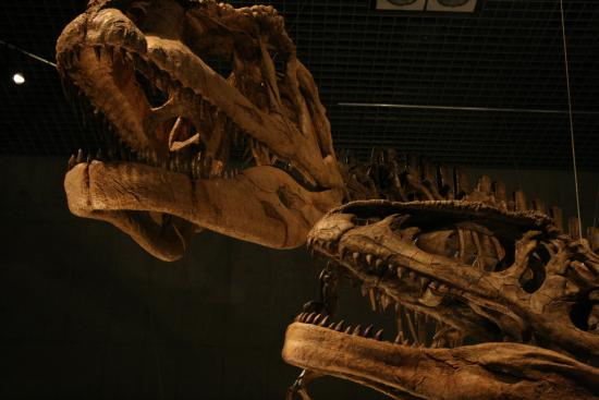 2009-6-13-恐竜博①