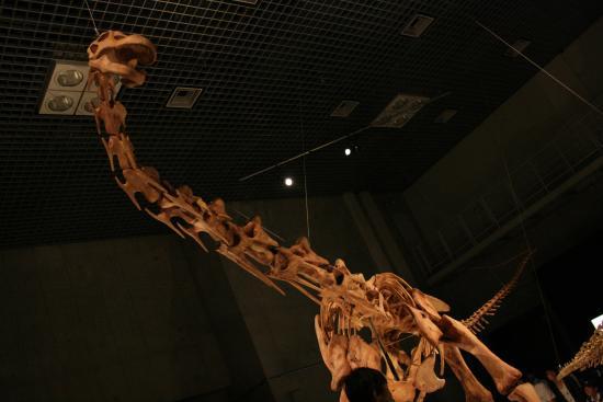 2009-6-13-恐竜博②