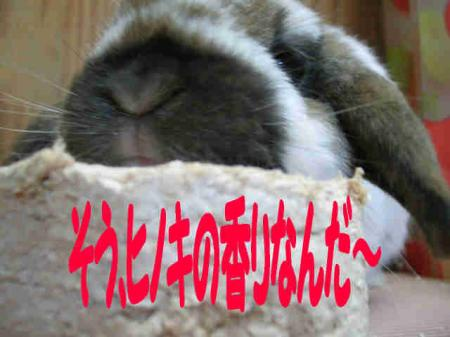 小五郎 3