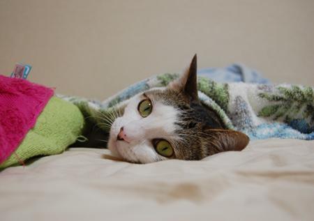 ベッドりん2