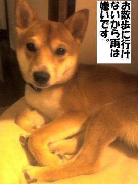 amekirai.jpg