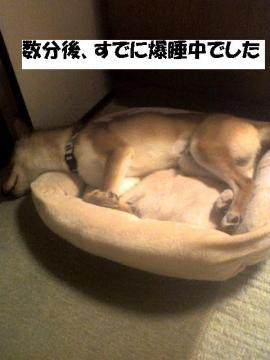bakusuichu.jpg