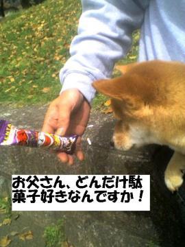dagasizuki.jpg