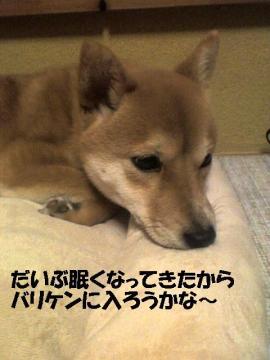 daibunemui.jpg