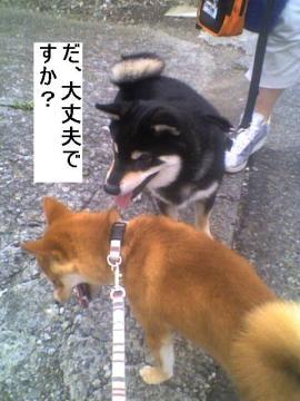 daijoubussuka.jpg