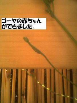 goyanoakachan.jpg