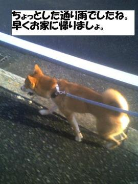 hayakukaerouyo.jpg