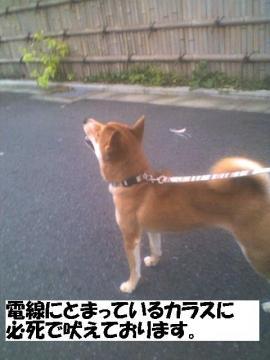 karasunihoeru.jpg