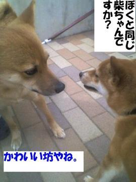 kawaiibouya.jpg