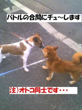 kisssiteru.jpg