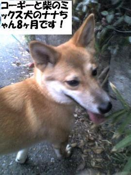 nanachan.jpg
