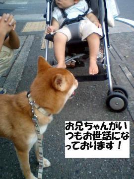 osewaninattemasu.jpg