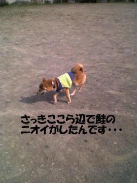 sakehadoko.jpg