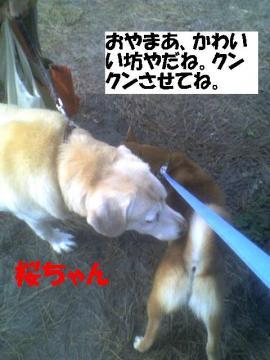 sakurachan.jpg