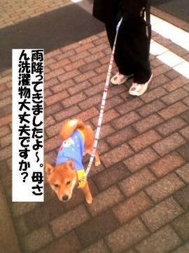 sentakumono.jpg