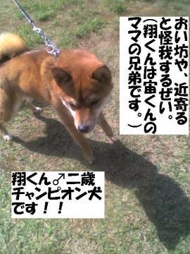 shoukun.jpg