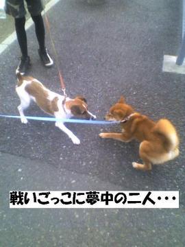 tatakaigokko.jpg