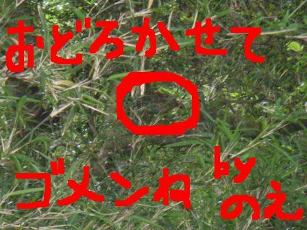2008_06170009.jpg