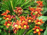 我が家の花2